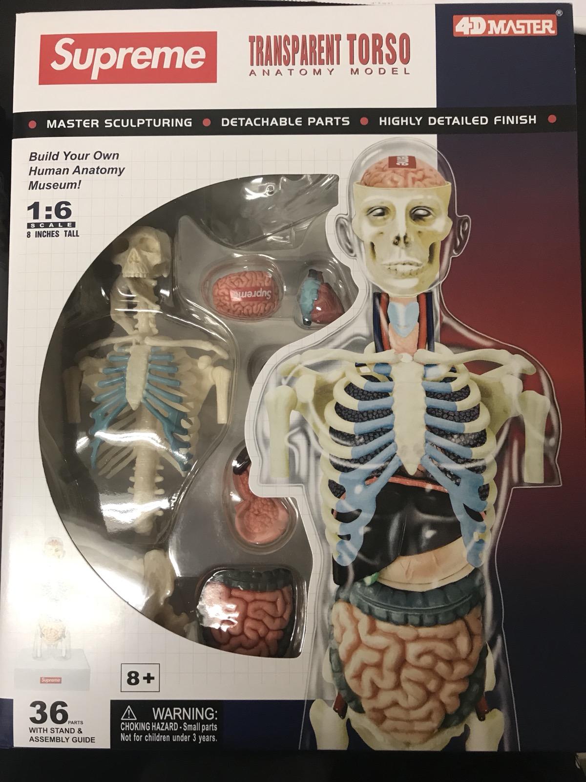 Supreme Supreme Male Female Anatomy Model Size One Size Supreme